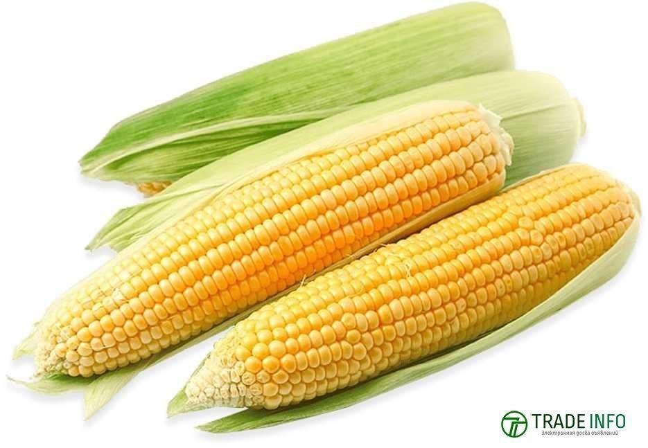 Кукуруза с поставкой в Узбекистан