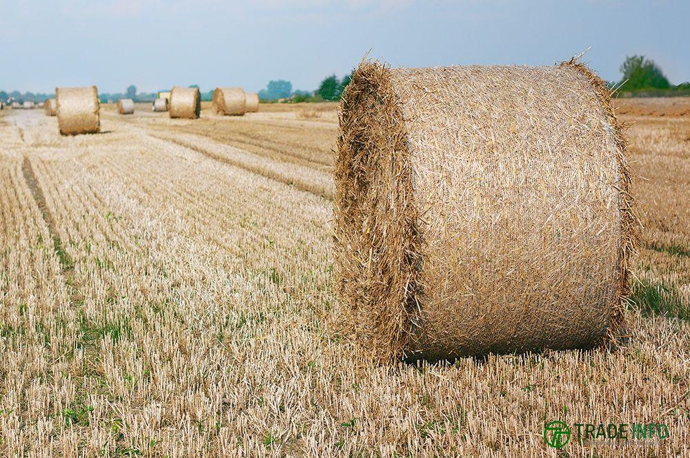 Сено в тюках(пшеница)